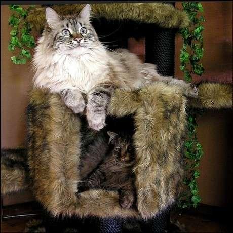 kedi sepetleri