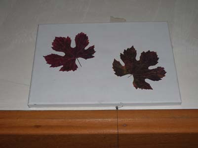 tuval üzerine kuru asma yapraklı tablo