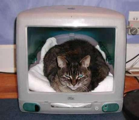 eski bilgisayarınızın dışı , kedinizin yeni evi olabilir.