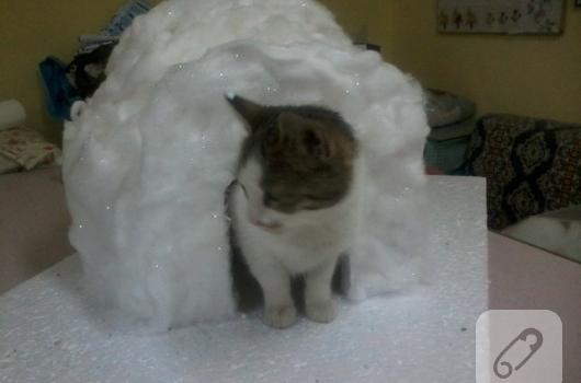 strafordan-kedi-evi-yapimi
